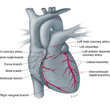 Illustrated Cardiac Anatomy